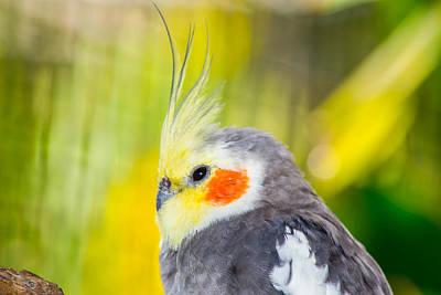 Photograph - Bird Macro by Shannon Harrington