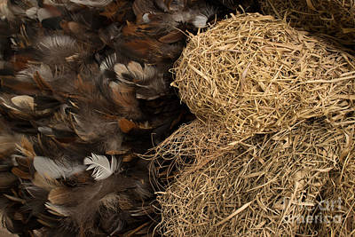 Photograph - Bird Nest And Feathers by Jason Rosette