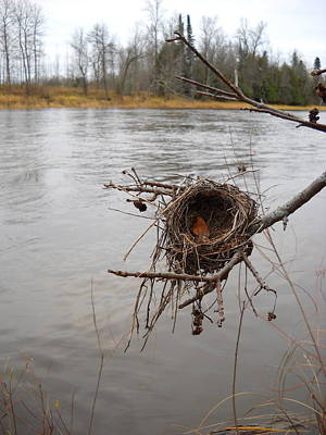Photograph - Bird Nest By Mississippi River by Kent Lorentzen