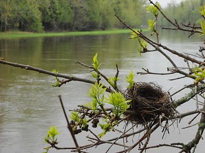 Photograph - Bird Nest In Ash Tree Branches by Kent Lorentzen