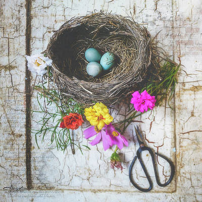 Photograph - Bird Nest With Blue Bird Eggs Beauty by Anna Louise