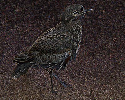 Photograph - Bird No. 40-1 by Sandy Taylor