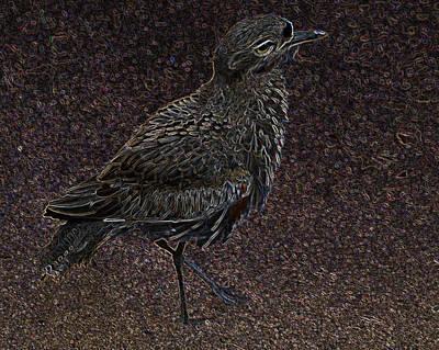 Digital Art - Bird No. 40-1 by Sandy Taylor