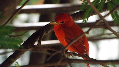 Photograph - Bird Of Colombia 3 by Dennis Pintoski