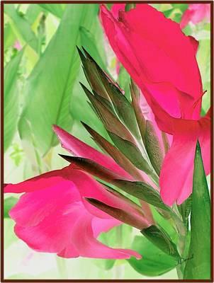 Bird Of Paradise 2 Art Print by Jim  Darnall