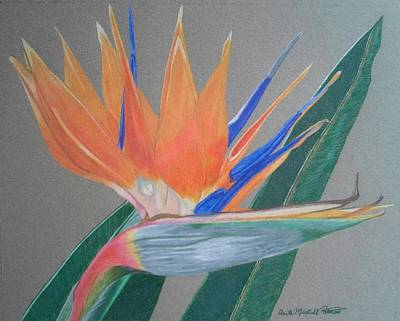 Drawing - Bird Of Paradise by Anita Putman