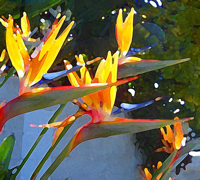 Bird Of Paradise Backlit By Sun Original by Amy Vangsgard