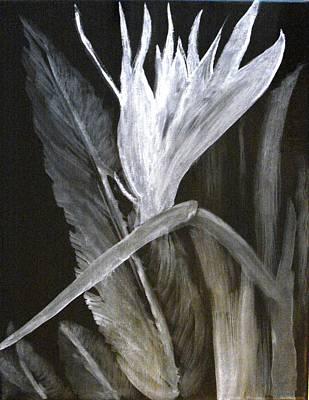 Bird Of Paradise Black And White Art Print