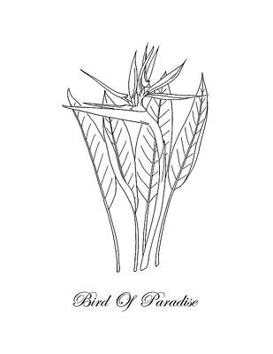 Drawing - Bird Of Paradise. Botanical by Masha Batkova