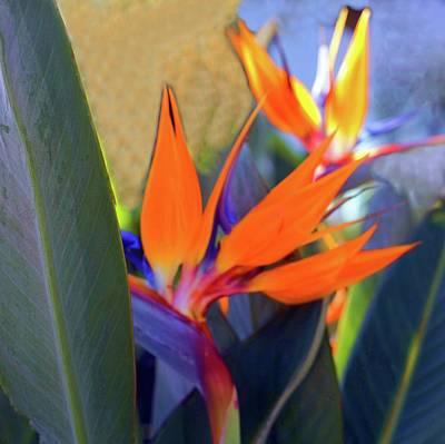 Digital Art - Bird Of Paradise  by Ellen O'Reilly