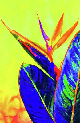 Bird Of Paradise Print by Estela Robles