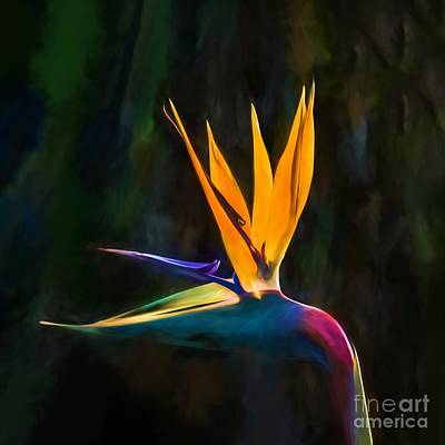Photograph - Bird Of Paradise Flower    Go2 by Ray Warren