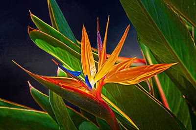 Photograph - Bird Of Paradise by HH Photography of Florida