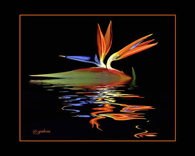 Photograph - Bird Of Paradise On Water by Geraldine Alexander
