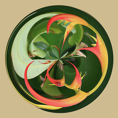 Art Print featuring the photograph Bird Of Paradise Orb by Bill Barber