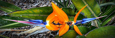 Photograph - Bird Of Paradise by Robert Melvin