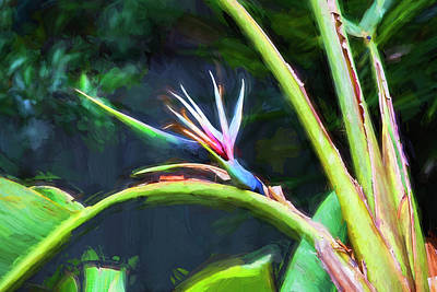 Photograph - Bird Of Paradise Strelitzia Reginae 003 by Rich Franco
