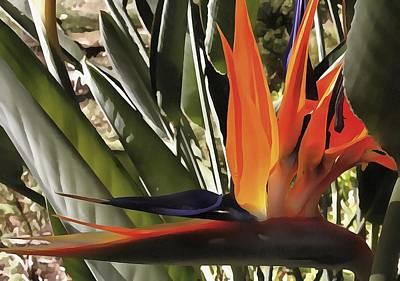 Painting - Bird Of Paradise Strelitzia by Tracey Harrington-Simpson
