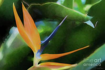 Photograph - Bird Of Paradise by Teresa Wilson