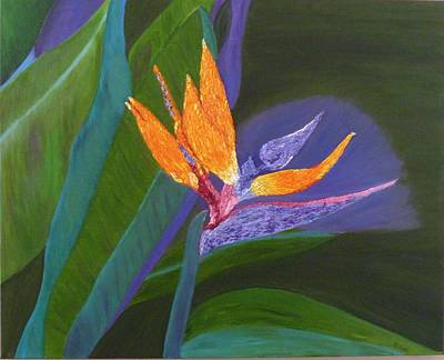 Painting - Bird Of Paradise by Vivian Stearns-Kohler