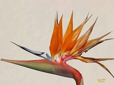 Bird Of Paradise With White Background Art Print