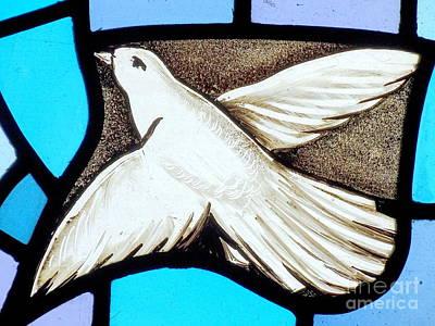 Photograph - Bird Of Peace by Ed Weidman