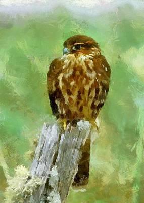 Digital Art - Bird Of Prey by Charmaine Zoe