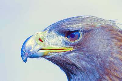 Eagle Painting - Bird Of Prey - Eagle 1 by Celestial Images