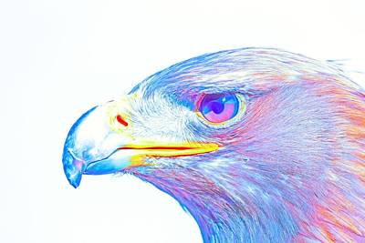 Eagle Painting - Bird Of Prey - Eagle 3 by Celestial Images