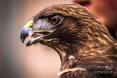 Photograph - Bird Of Prey Profile by Blake Webster