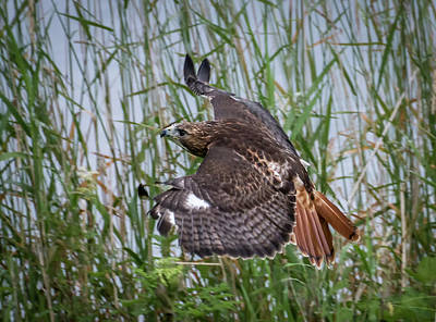 Photograph - Bird Of Prey by Sam Smith Photography