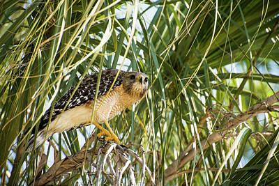 Hawk Photograph - Bird Of Prey by Zina Stromberg