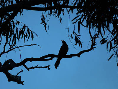 Photograph - Bird On A Bough by Mark Blauhoefer