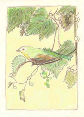 Drawing - Bird On A Branch by Donna Munro