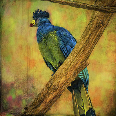Art Print featuring the photograph Bird On A Branch by Lewis Mann