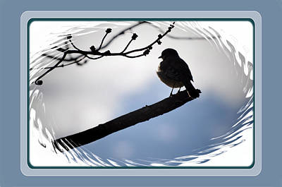 Bird On A Branch Art Print by Russ Mullen