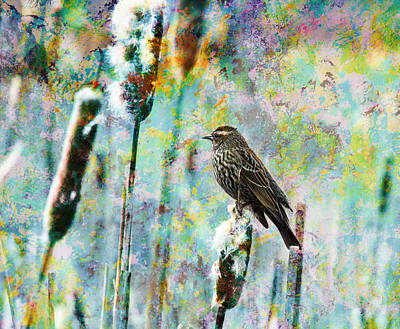 Photograph - Female Red Winged Black Bird On A Cattail - Meadow Birds by Marie Jamieson