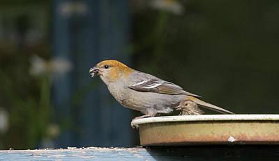 Photograph - Bird On A Feeder by Gloria Anderson