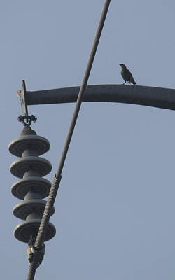 Photograph - Bird On A High Wire by Sheri LaBarr