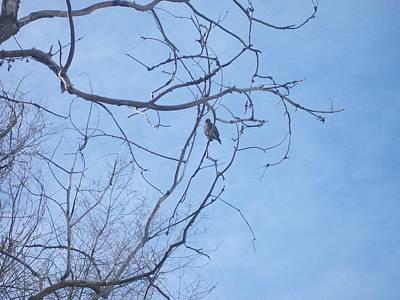 Photograph - Bird On A Limb by Jewel Hengen