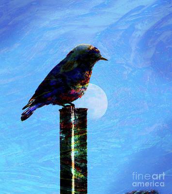 Photograph - Bird On A Post by Robert Ball