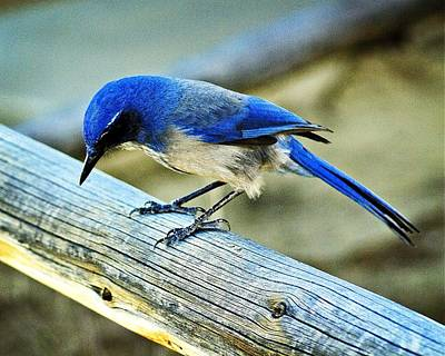 Photograph - Bird On A Rail by Marty Koch