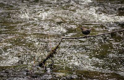 Bird On A River Art Print