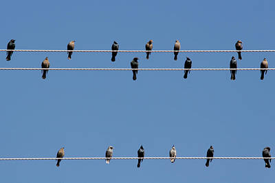 Fall Photograph - Bird On A Wire by Christine Till