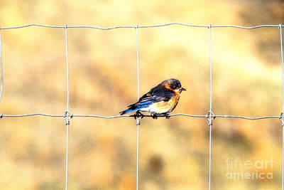 Photograph - Bird On A Wire by Elizabeth Winter