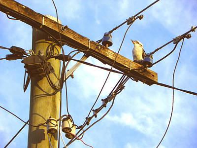 Bird On A Wire Art Print by Evguenia Men