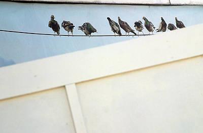 Bird On A Wire Art Print by Jez C Self