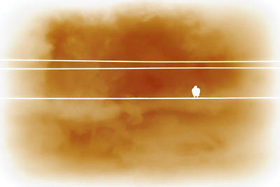 Bird On A Wire Orange Art Print