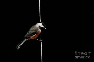 Photograph - Bird On A Wire by Paul Mashburn