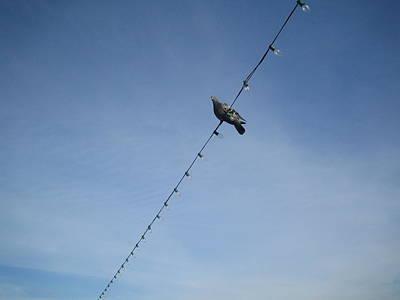 Bird On A Wire Art Print by Tiara Moske